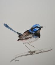 Blue Wren 4, watercolour on paper, 20cm x 20cm 2014