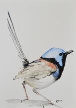 Blue Wren 5, watercolour on paper 25cm x 35cm 2014